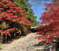 紅葉狩り 高雄山神護寺